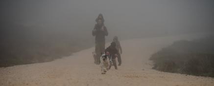 Nala im Nebel